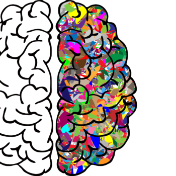 brain-2750415